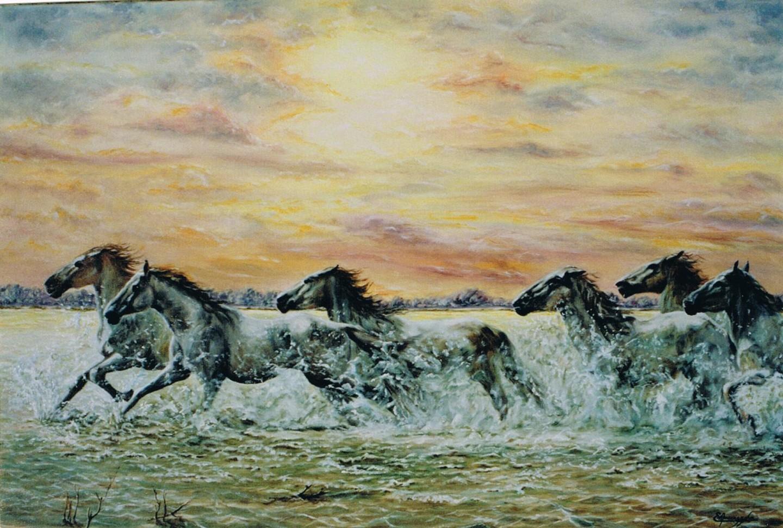 Enio - 086-chevaux-en-camargue-25m.jpg
