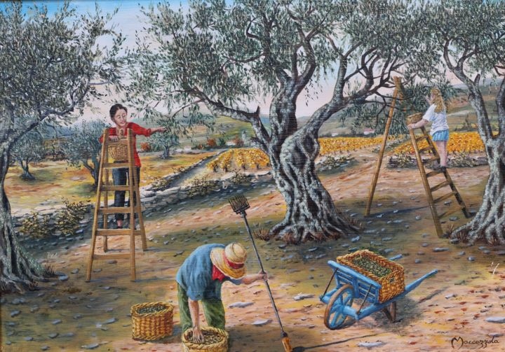 ENIO - n-315-cueillette-des-olives.jpg